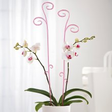 Orchid Stick transparent pink