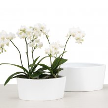 Orchid Pot Oval Panna