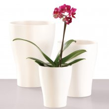 Orchid Planter Panna