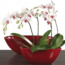 Orchid Plant Pot Zen Dark Red