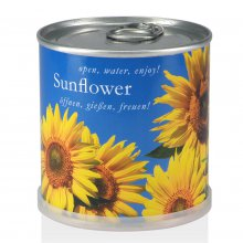 Sunflower in Can