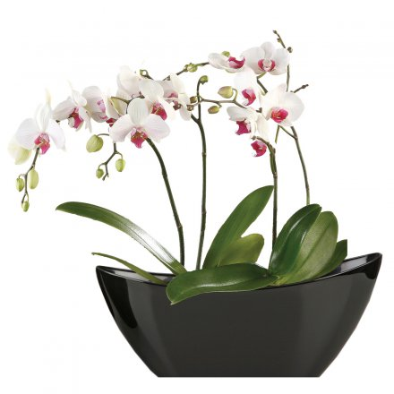 Scheurich Planter Wave 230 Bright Black