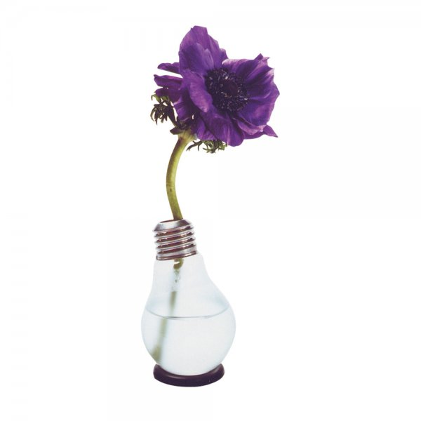 Blühbirne - Light Bulb Vase