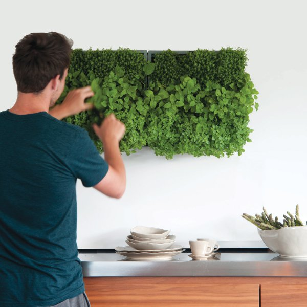 Vertical Indoor or Outdoor Garden Karoo