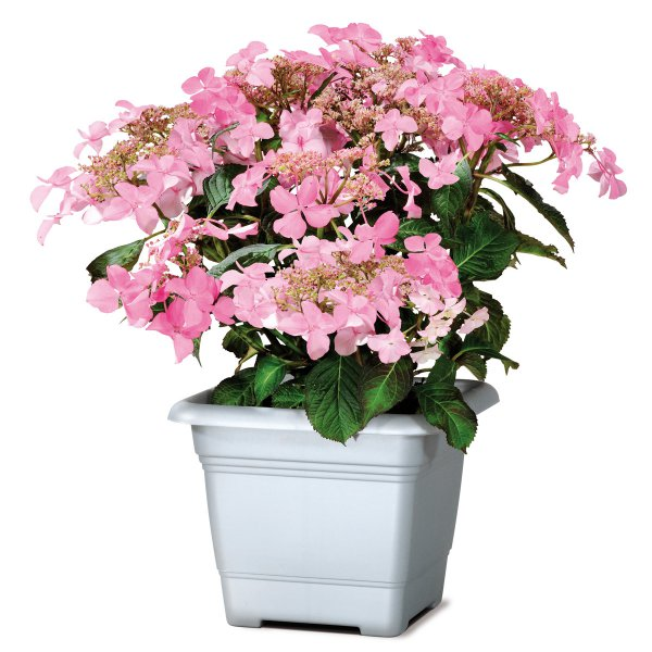 Scheurich Planter 326 Chrome matt