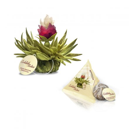 Creano Abloom-Tealini Set of 12 White Tea in a Wooden Gift Box